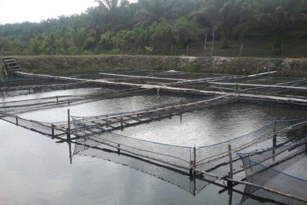 bursatani fishery